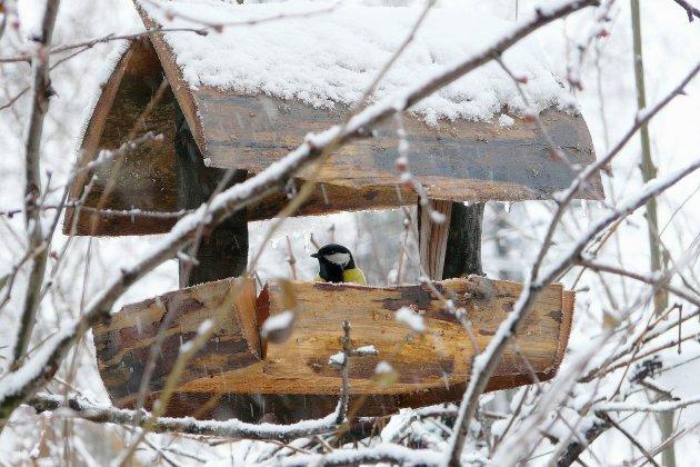 Caen: nourrir les oiseaux au jardin en hiver