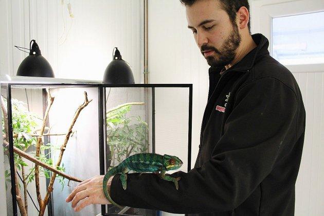 Nicolas Hamoniaux: soigneur animalier au parc Biotropica