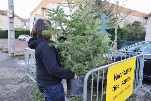 À Caen, une deuxième vie pour vos sapins de Noël
