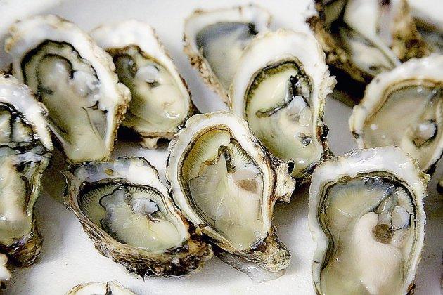 Pays de Caux: les coquilles d'huîtres se trient