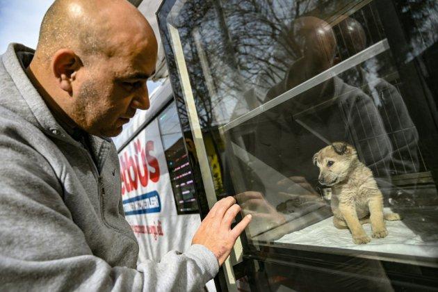 La municipalité d'Istanbul au chevet des animaux de rue