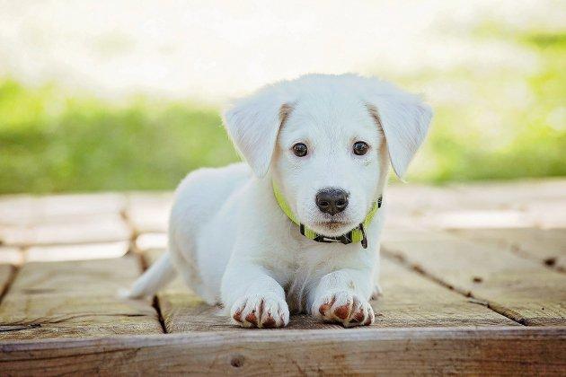 GetPet : une application pour adopter des chiens