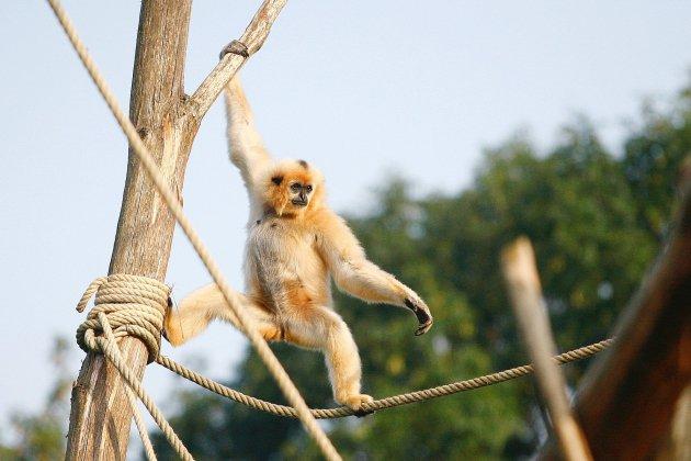 Le parc animalier de Champrépus dans la Manche accueille de nouveaux animaux