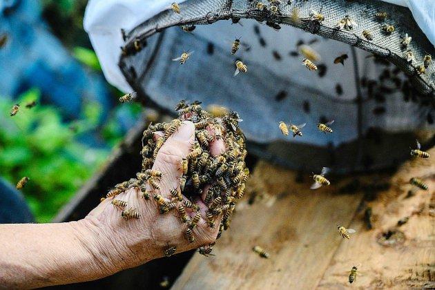A Hong Kong, l'homme qui récoltait les abeilles