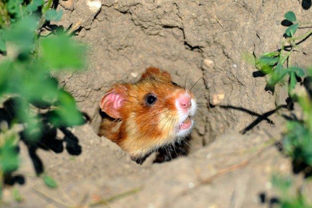 Biodiversité: la France ambitieuse à défaut d'être forcément exemplaire