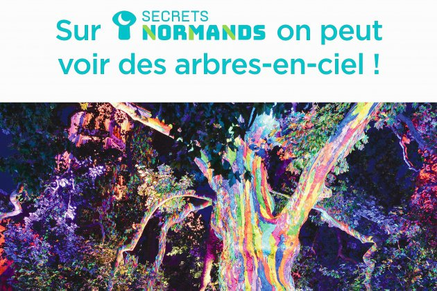 Secrets Normands, la nouvelle solution pour visiter la Normandie