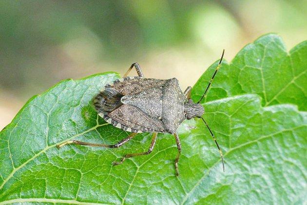 Et si vous aidiez à recenser les nouveaux insectes de Normandie?