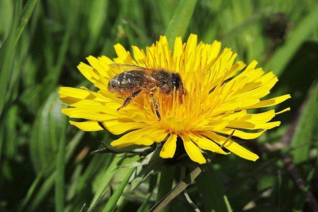 La Normandie aux petits soins avec les abeilles locales