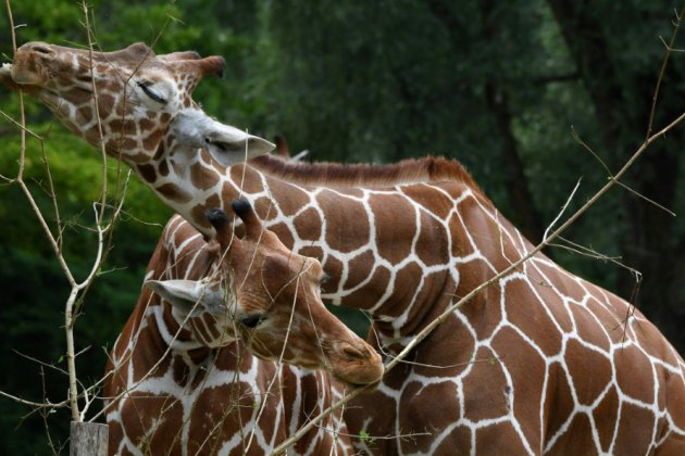 Au nom de la tolérance, visite sur l'homosexualité au Zoo de Munich