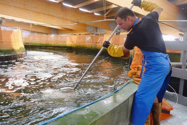 La ferme des saumons d'Isigny: un élevage innovant et 100% normand