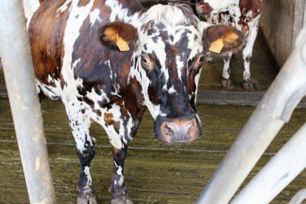 Transport d'animaux vivants: des restrictions en cas de canicule