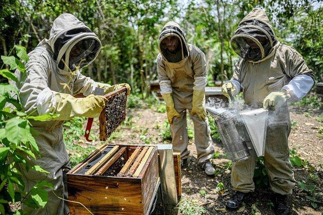 """Du miel pour """"panser"""" les blessures de guerre d'un village de Colombie"""