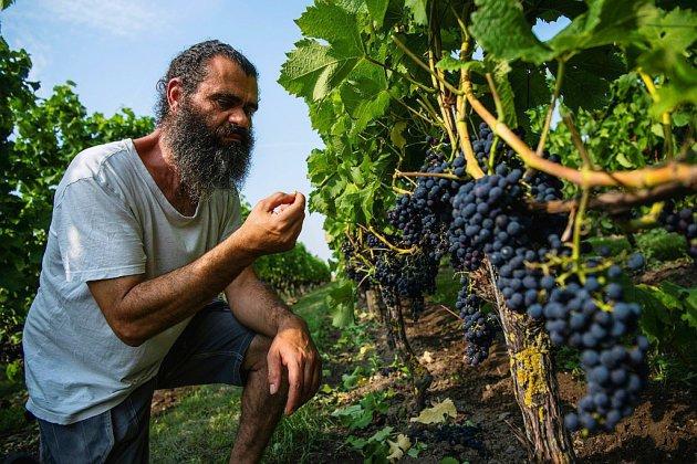 Faire du vin dans les pays nordiques, une gageure qui profite de la hausse des températures