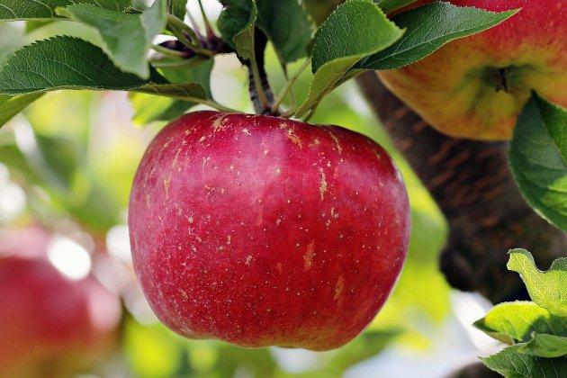 La ville fête la pomme