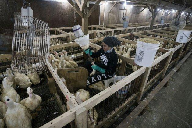 New York interdit la commercialisation du foie gras à partir de 2022