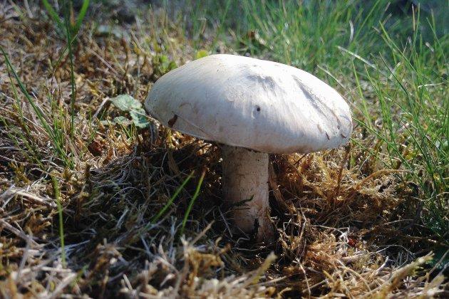 Une famille intoxiquée avec des champignons achetés sur le marché