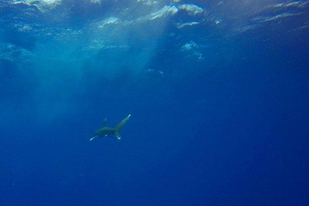Déjà menacés, les océans en manque d'oxygène