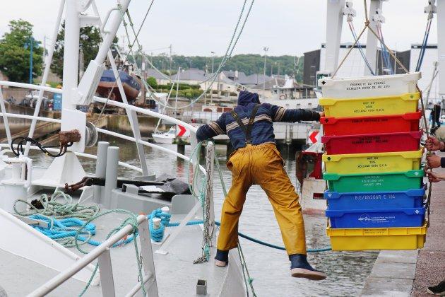 Plus de 11000 tonnes débarquées à Port-en-Bessin et Grandcamp-Maisy