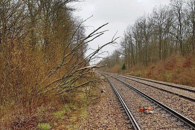 Tempête Dennis : le trafic des trains perturbé par la chute d'arbres
