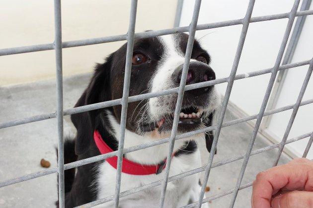 Le refuge pour animaux de Lintot lance un appel aux dons