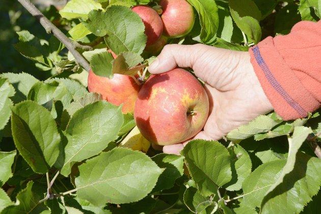 La ferme Lambert ne vend plus de pommes depuis un mois