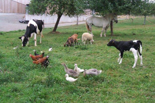 Un été à la ferme pour des vacances apprenantes et ludiques