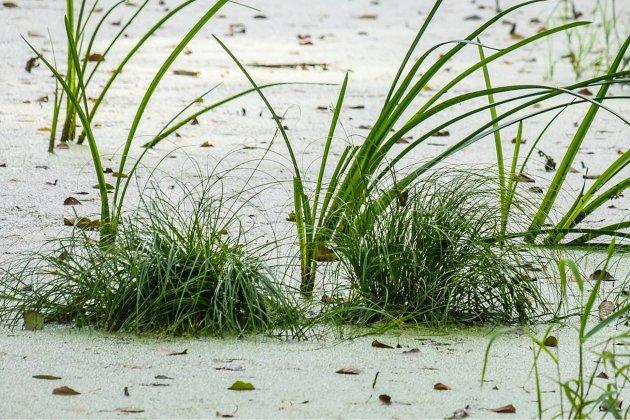 L'interdiction de baignade au lac de Caniel est levée