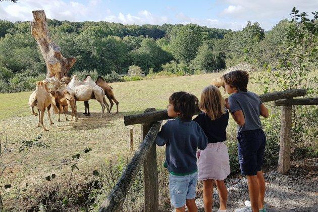 2020, meilleure saison du Parc animalier d'Ecouves malgré le Covid-19