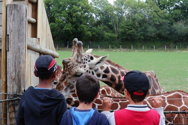 Après un bel été, le zoo redoute les conséquences de la crise cet hiver