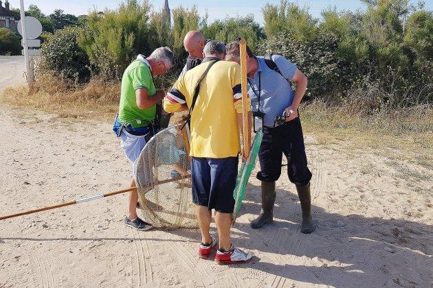 Week-end de grandes marées : les pêcheurs à pied contrôlés