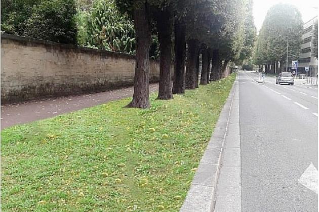 Plus de vert et moins de bitume sur le boulevard Bertrand
