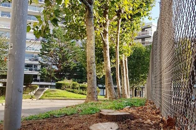 Un collectif pour s'opposer à tout abattage d'arbres en ville