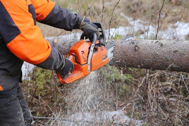 Un homme de 55 ans tué par la chute d'un arbre