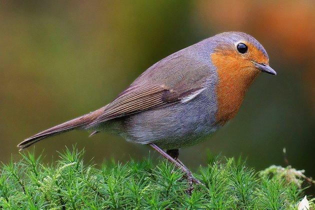 Participez au grand comptage des oiseaux de jardin, de chez vous!