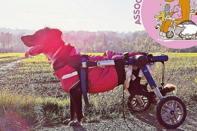 Un projet pour l'accueilde chiens lourdement handicapés