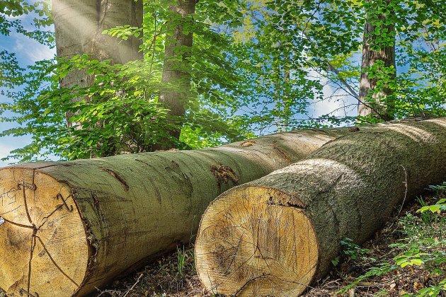 Un bûcheron grièvement blessé après la chuted'un arbre
