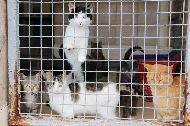 24 chats cherchent une famille d'accueil après la mort de leur maître