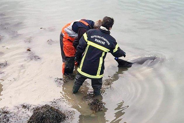 Quatre dauphins échoués: trois ont pu êtresauvés