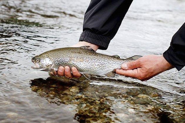 Pollution au fioul dans une rivière : l'ouverture de la pêche retardée