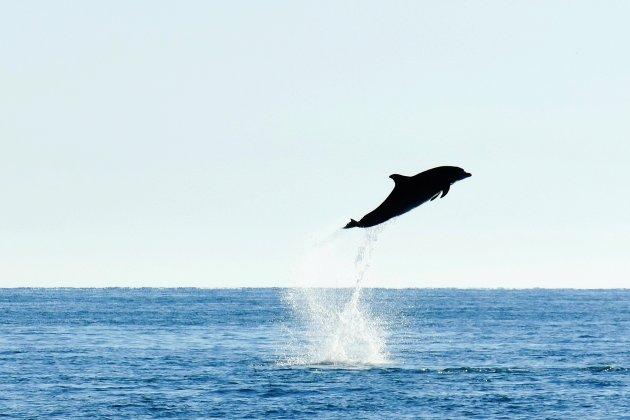 Un dauphin échoué remis à l'eau par les pompiers
