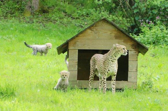 Naissances exceptionnelles pour la réouverture du zoo de Cerza