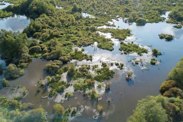 Zone naturelle sensible, le marais du Grand-Hazé est un réservoir de vie!