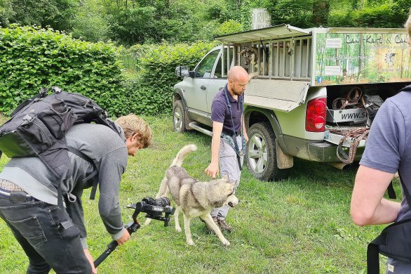 Des huskies, vedettes de la prochaine vidéo de Normandie Tourisme