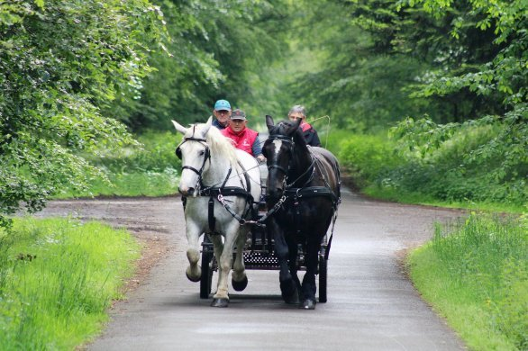 Visitez l'Orne avec des chevaux percherons