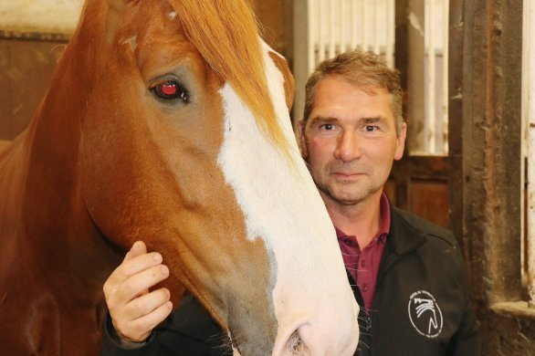 Les chevaux du haras du Pin font rayonner laNormandie en Équateur