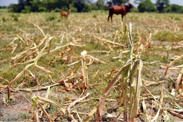 La MSAdébloque plus de 150 000€ pour les agriculteurs ornais