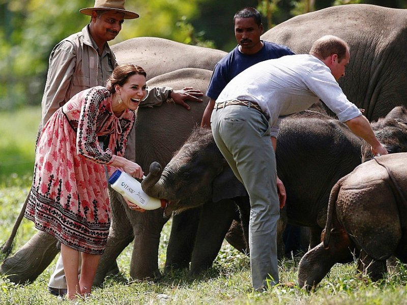 Le Prince William et sa femme Catherine nourrissent des bébés éléphants au Centre for Wildlife Rehabilitation and Conservation (CWRC) à Kaziranga, dans l'Etat indien d'Assam le 13 avril 2016