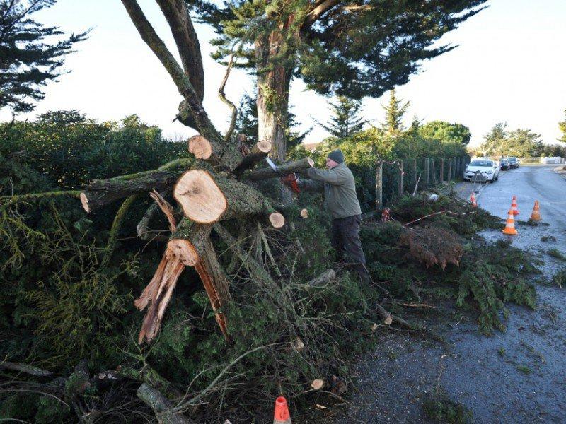Un arbre déraciné par la tempête à Angoulins près de La Rochelle le 4 février 2017    XAVIER LEOTY [AFP]