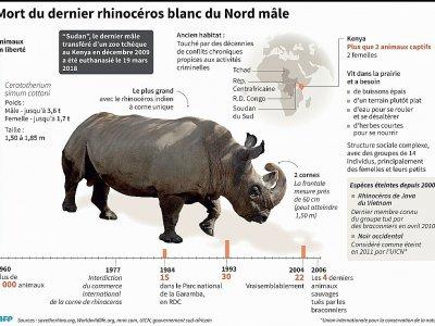 Mort du dernier rhinocéros blanc du Nord mâle - A.Leung/J.Saeki, dmk/abm/vl/pld [AFP]