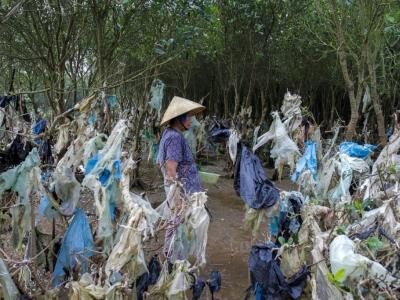 Une Vietnamienne marche dans une forêt côtière dont les arbres sont jonchés de plastique, le 18 mai 2018 à Thanh Hoa province, à 150 km au sud de Hanoï.    Nhac NGUYEN [AFP/Archives]